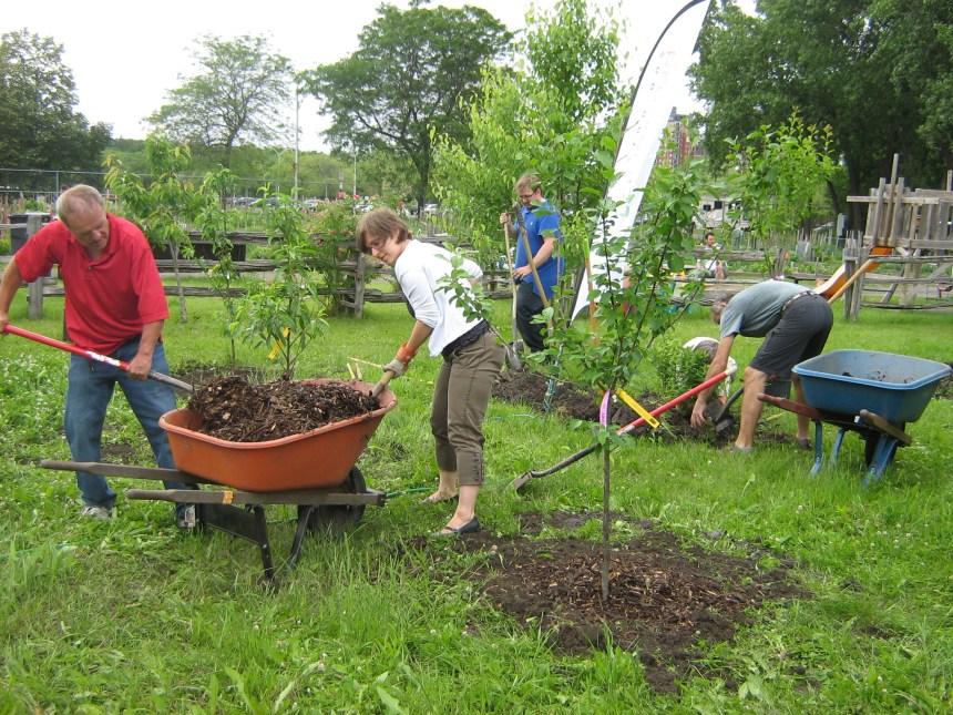 Un nouveau jardin collectif au parc Angrignon