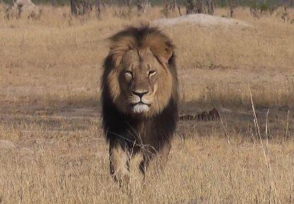 Conférence controversée sur la chasse en Afrique