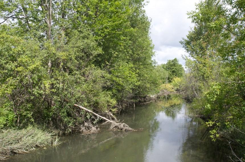 Pierrefonds Ouest: Sierra Club Québec à l'origine d'une plainte contre le groupe Grilli