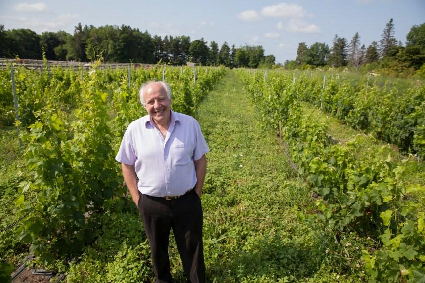 Un premier vin montréalais produit à Senneville