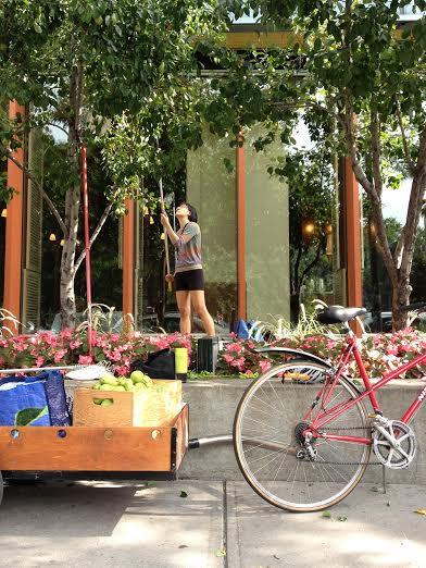 Appel aux bénévoles pour cueillir des fruits dans Montréal