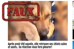 Non, cette chienne ne verse pas de «vraies larmes» (et devrait voir un vétérinaire)