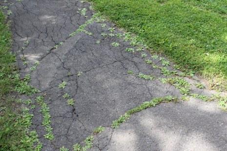 Le parcs ayant été aménagé il y plus de 50 ans, les sentiers étaient à refaire depuis longtemps.