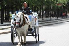 La Ville poursuivie sur son nouveau règlement sur les calèches
