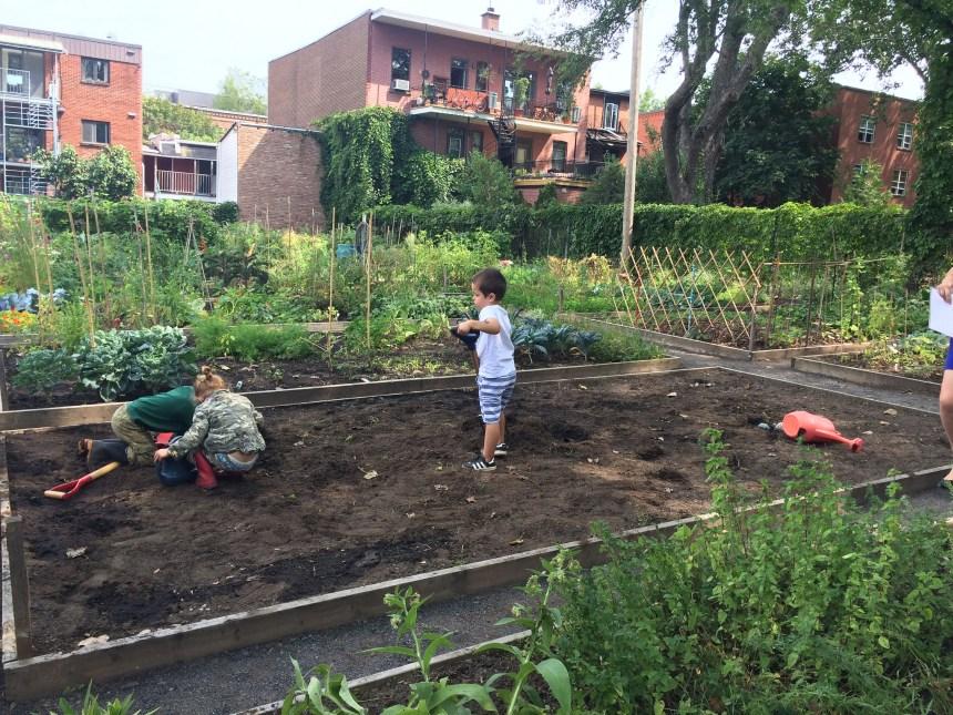 Les jardins communautaires de Montréal ont 40 ans