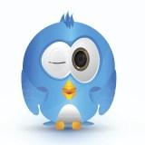 blue cute bird love eye
