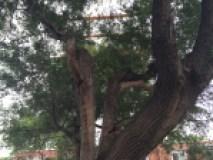arbre hydro-québec