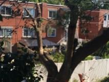 arbre croissant montrichard