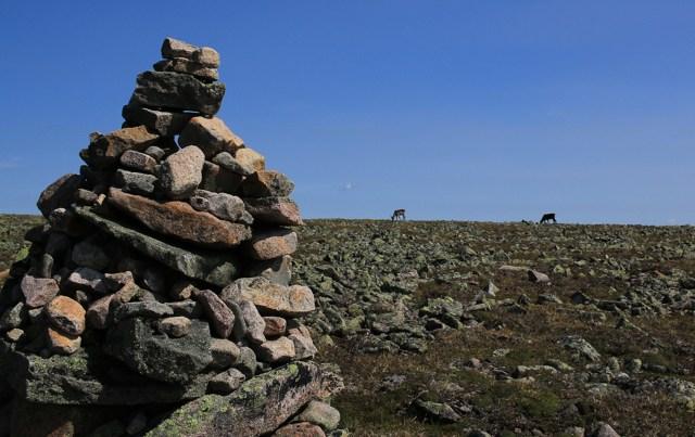 gaspésie caribous mont Jacques-Cartier