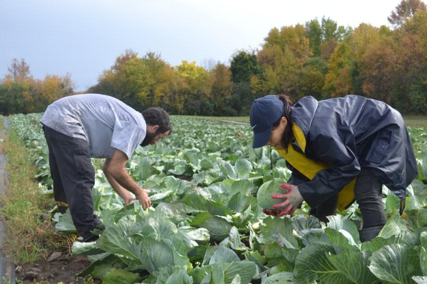 Agriculture urbaine: 30 000 légumes donnés aux plus démunis