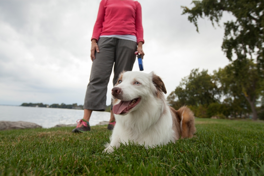 Enfin des parcs à chiens publics à Lachine!