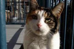 Pierrefonds-Roxboro: lutter contre la surpopulation des chats errants
