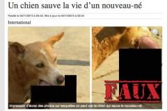 Non, ceci ne sont pas des photos d'un chien qui a sauvé la vie d'un nouveau-né