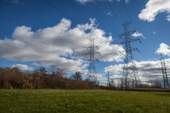 Hydro-Québec finance la plantation d'arbres sous ses lignes au Bois-de-Liesse