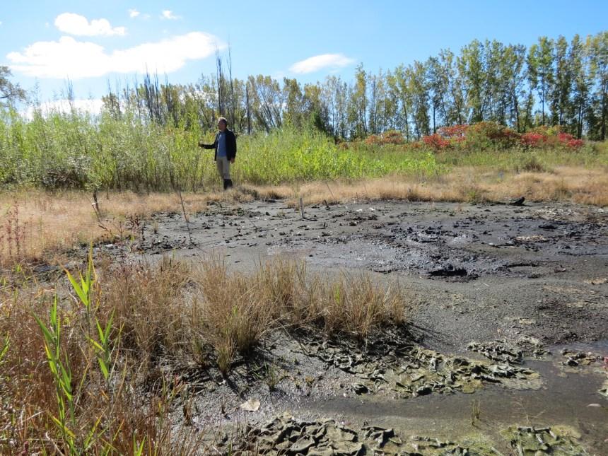 Utiliser des plantes pour décontaminer les sols