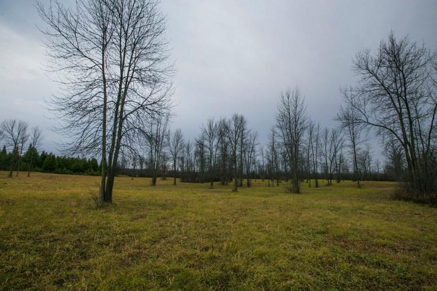 Parc-nature du Bois-de-l'île-Bizard: une expansion de près de 38 hectares