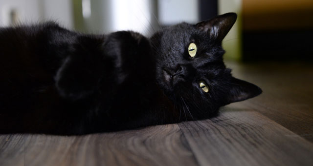 Vendredi 13 chat noir