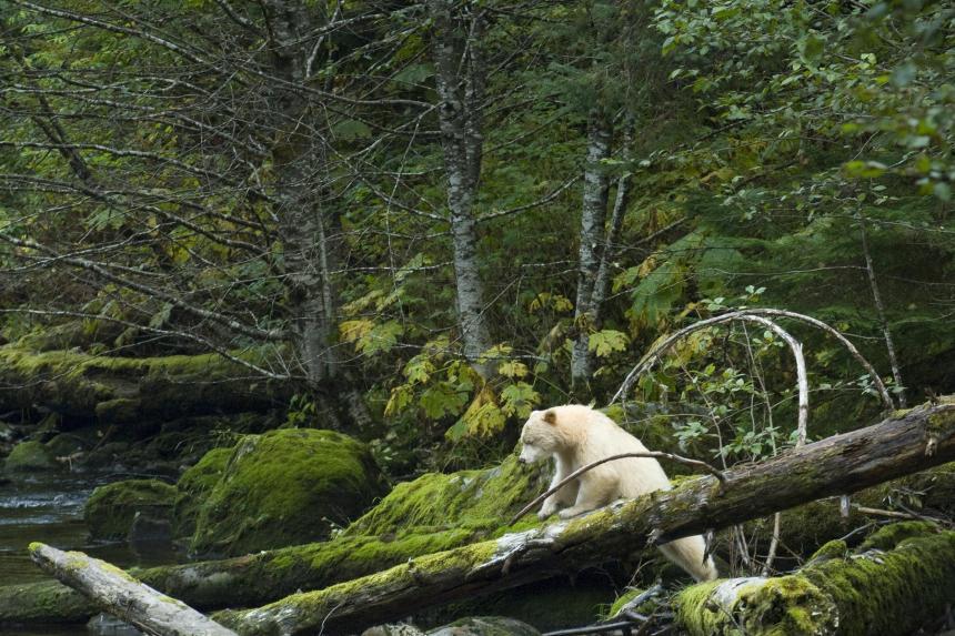 La Colombie-Britannique devance le Québec pour la protection des forêts