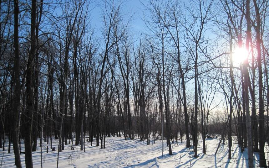Boisé du parc Marcel-Laurin : 70 000 $  pour la protection de la biodiversité