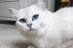 Voici le plus beau chat du monde: top 6 des chats les plus célèbres du web