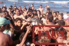 Non, des touristes argentins n'ont pas tué un bébé dauphin en prenant des selfies