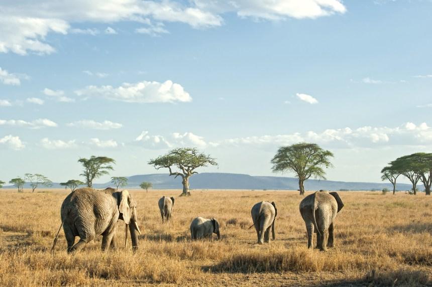 Les Masaïs seraient chassés au profit des touristes