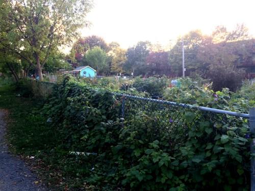 ruelle verte jardin basile patenaude