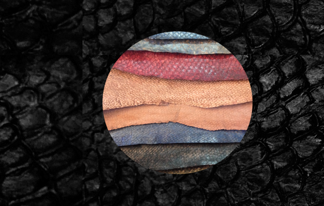 Le cuir de poisson fait sa place en mode