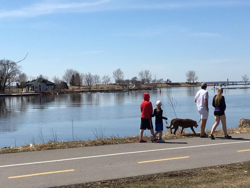 Chiens sur le bord du canal de Lachine: l'interdiction prend les maîtres à rebrousse-poil