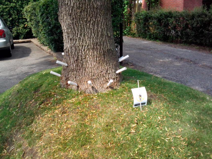 Agrile du frêne: l'importance de traiter les arbres privés