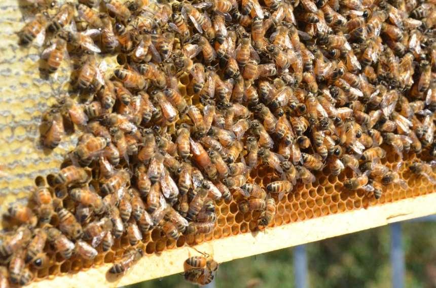 Des ruches sur le toit d'une école