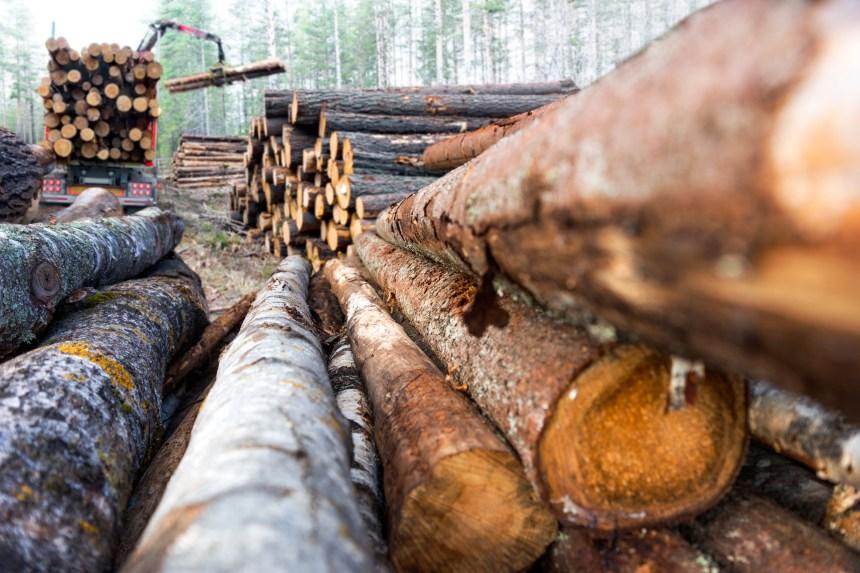 GES: l'industrie forestière annonce ses cibles