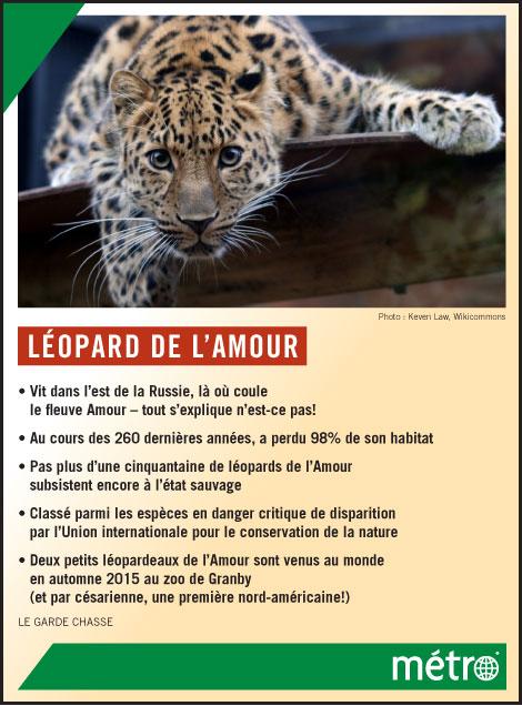 Leopard-de-lamour