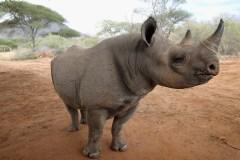 Le Parti Rhinocéros promet d'en finir avec l'hiver canadien