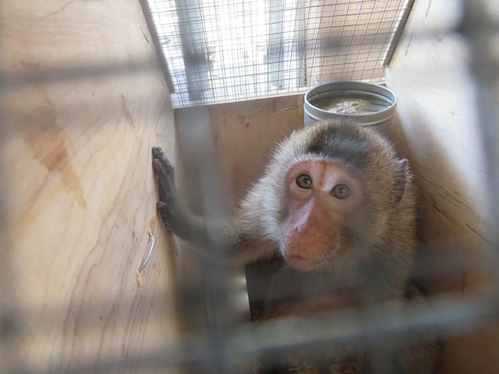 Le Guantanamo des primates