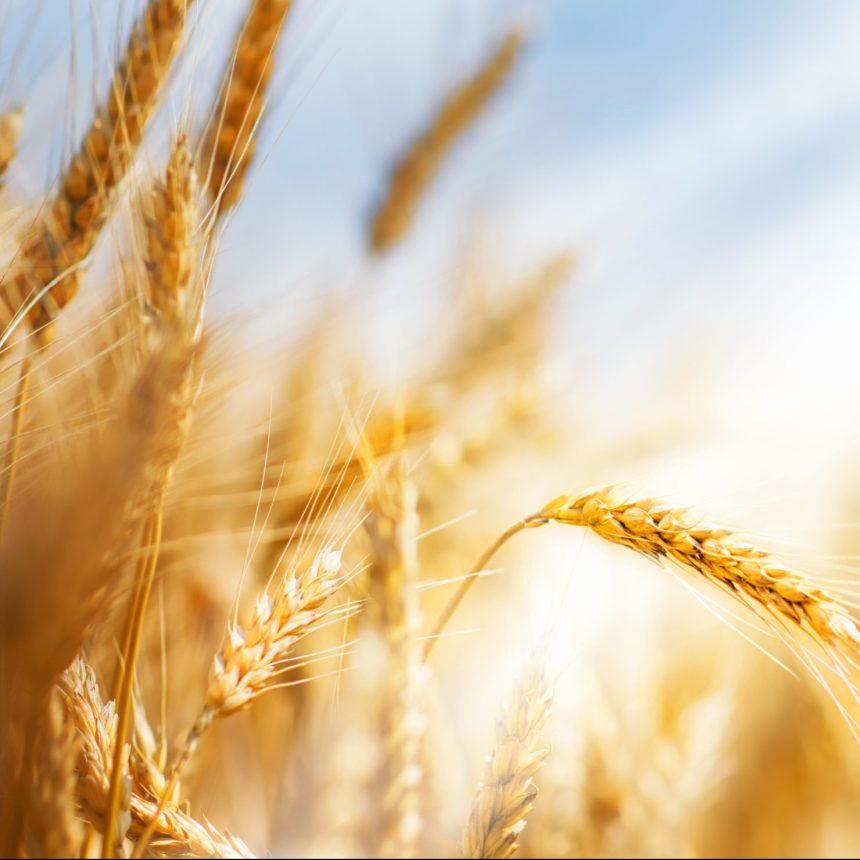 Cinq trucs pour les intolérants au gluten