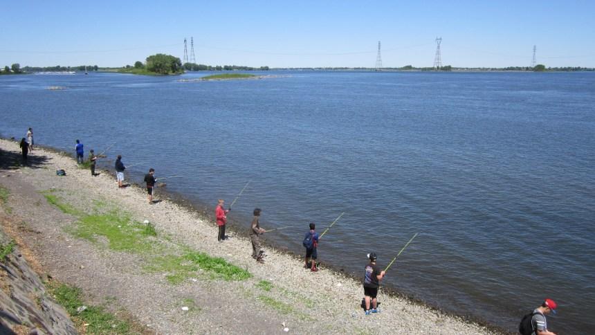 Pêche en herbe sur les rives du Saint-Laurent