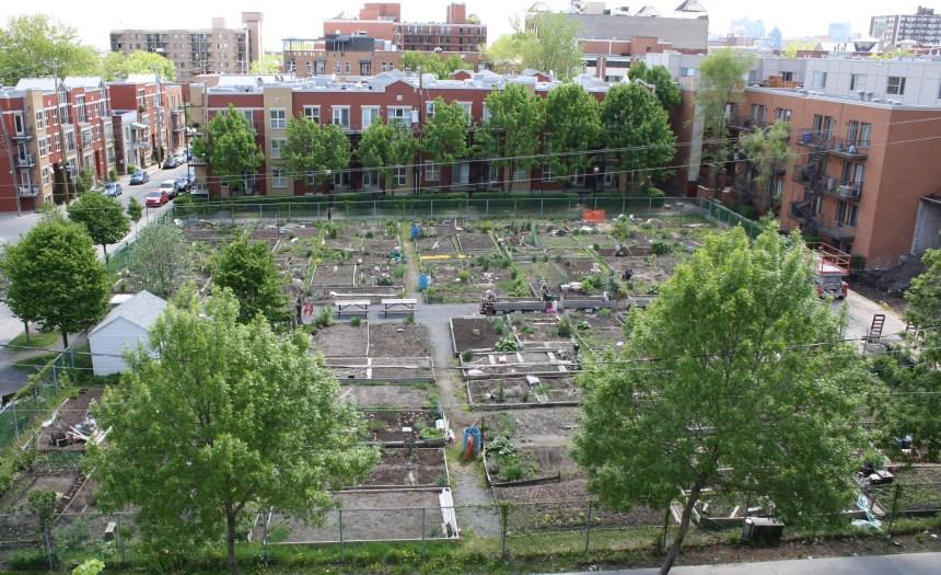 5 ans d'attente pour les jardins communautaires du Plateau