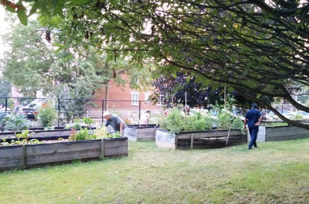 Du nouveau dans les jardins communautaires de Rivière-des-Prairies–Pointe-aux-Trembles