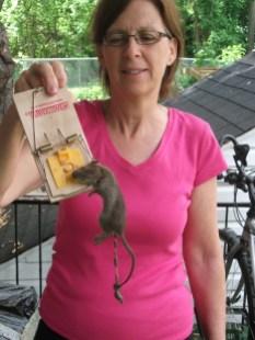 Francine Roy a attrapé plusieurs rats sur son balcon en un après-midi. Photo: Collaboration spéciale