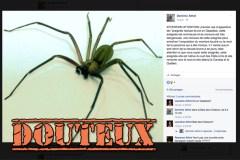 Non, il n'y a probablement pas d'araignée recluse brune en Gaspésie