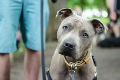 Cinq façons de prévenir un comportement agressif chez les chiens
