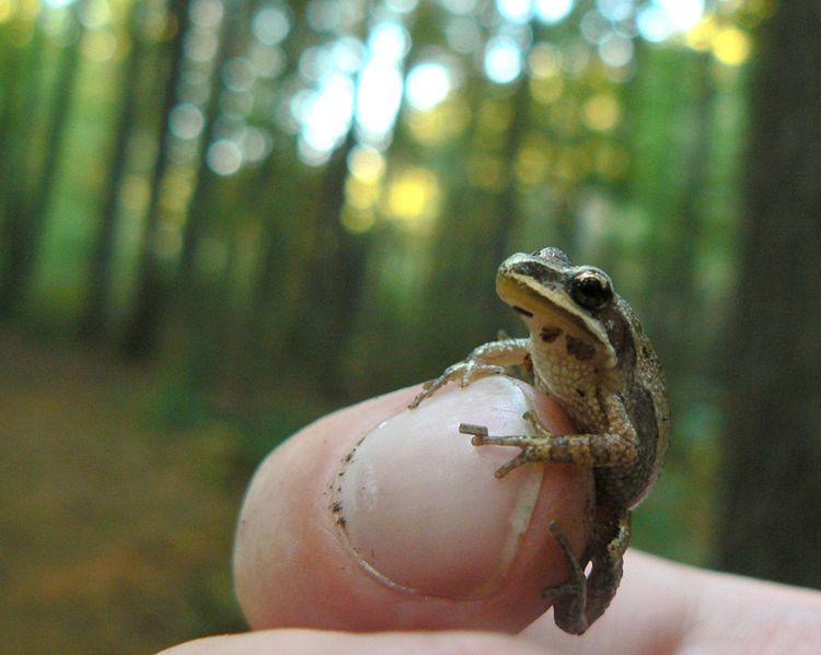 Une grenouille l'emporte contre un promoteur