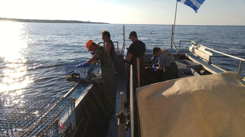 Vivre la pêche au homard en Gaspésie