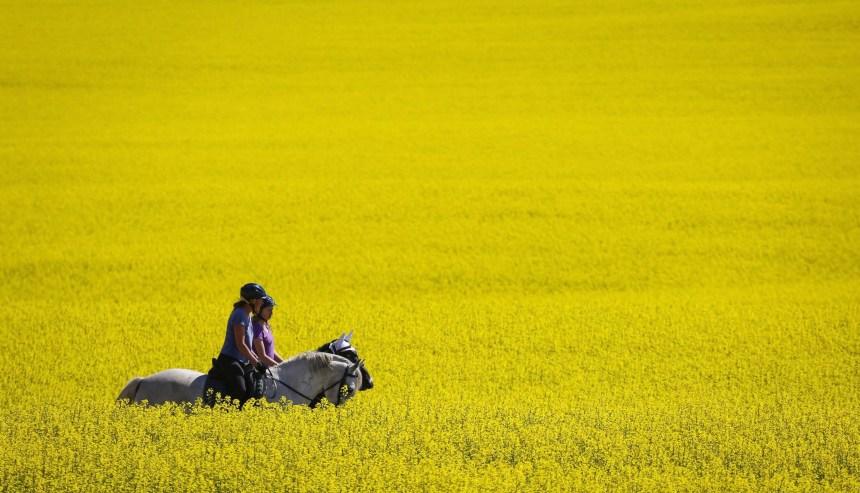 Conflits commerciaux: les producteurs de grains appellent à l'aide d'Ottawa