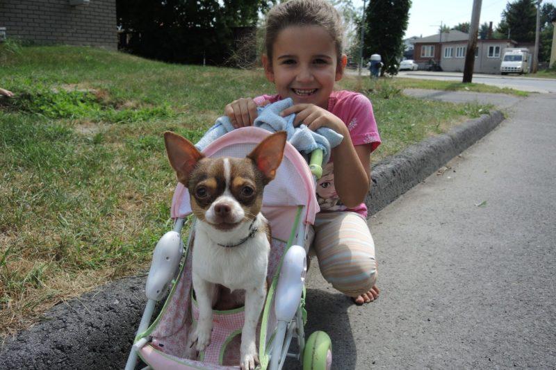 Une fillette retrouve son chien grâce à Facebook