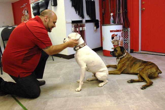 Quelques conseils d'un éducateur canin: comment approcher un chien?