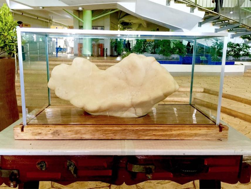 Un pêcheur philippin a gardé cachée une perle géante pendant 10 ans