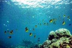 Requiem pour le corail