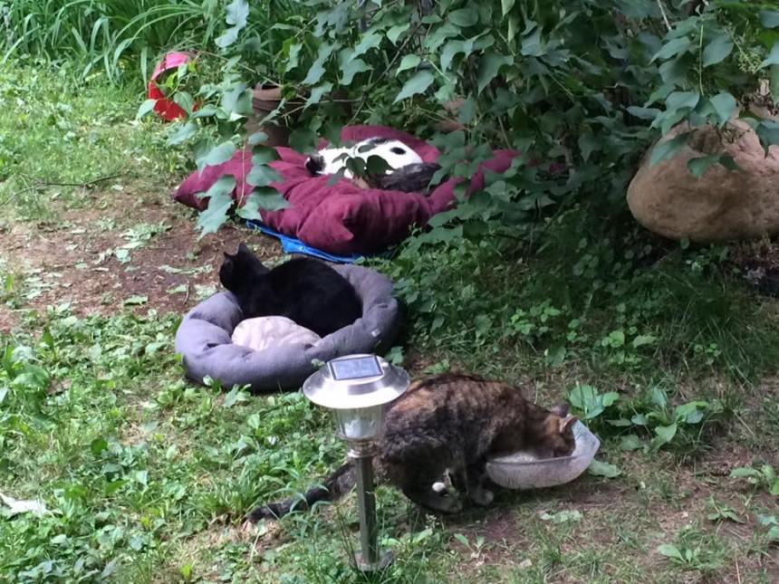 Sort incertain pour un «sanctuaire» pour chats